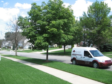 Emerald Ash Border West Michigan Tree Services