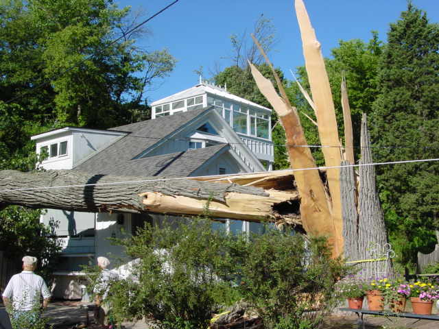 Tree Removal and stumps West Michigan Tree Services